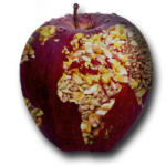 Hep Monatzeder Website Apfel Getreide Entwicklungspolitik